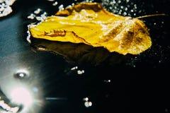 Κίτρινα, πράσινα φύλλα φθινοπώρου του πλαισίου δέντρων η σύνθεση στο α στοκ εικόνα με δικαίωμα ελεύθερης χρήσης
