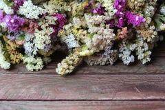 Κίτρινα, ρόδινα και μπλε ανθίζοντας λουλούδια limonium Kermek, ξύλινα Στοκ Φωτογραφία