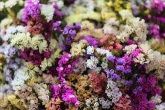 Κίτρινα, ρόδινα και μπλε ανθίζοντας λουλούδια limonium Kermek Στοκ Φωτογραφίες