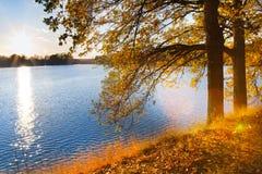 Κίτρινα δρύινα δέντρα στο ανάχωμα λιμνών Svet σε Trebon Στοκ Φωτογραφία