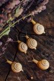 Κίτρινα σαλιγκάρια που περπατούν γύρω από τον κήπο Σαλιγκάρι στο δέντρο στο θόριο Στοκ εικόνες με δικαίωμα ελεύθερης χρήσης