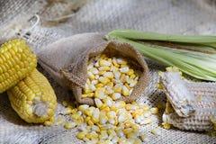 Κίτρινα σιτάρια καλαμποκιού στο zea σάκων fique mays στοκ εικόνες με δικαίωμα ελεύθερης χρήσης