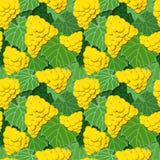 Κίτρινα σταφύλια και φύλλα διανυσματική απεικόνιση