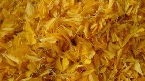 Κίτρινα ταπετσαρίες και υπόβαθρα σύστασης λεπτομερειών λουλουδιών Στοκ Εικόνα