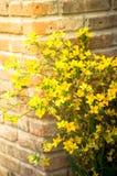 Κίτρινα τεχνητά λουλούδια, εκλεκτής ποιότητας χρώμα που φιλτράρεται Στοκ Εικόνες
