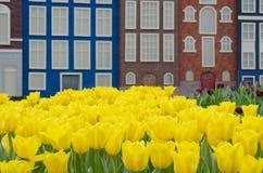 Κίτρινα τουλίπες και σπίτια καναλιών Στοκ Εικόνα