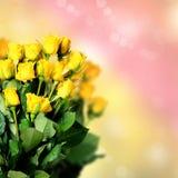 Κίτρινα τριαντάφυλλα Στοκ Εικόνες
