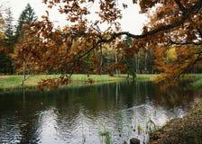 κίτρινα φύλλα κλάδων ουρανού πάρκων φθινοπώρου φύσης δέντρων αντανάκλασης νερού λιμνών υπαίθρια Στοκ φωτογραφία με δικαίωμα ελεύθερης χρήσης
