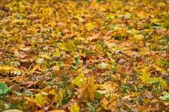Κίτρινα φύλλα στην πράσινη χλόη Στοκ φωτογραφία με δικαίωμα ελεύθερης χρήσης