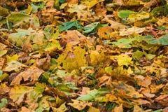 Κίτρινα φύλλα στην πράσινη χλόη Στοκ εικόνες με δικαίωμα ελεύθερης χρήσης