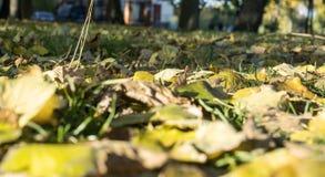 Κίτρινα φύλλα στη χλόη στοκ εικόνες