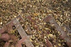 Κίτρινα φύλλα στο έδαφος Στοκ Φωτογραφίες