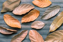 Κίτρινα φύλλα στο ξύλινο υπόβαθρο Εποχιακό πρότυπο εμβλημάτων φθινοπώρου Στοκ Εικόνα