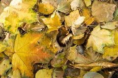 Κίτρινα φύλλα στο πάρκο φθινοπώρου στοκ εικόνα