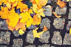 Κίτρινα φύλλα στο πεζοδρόμιο κυβόλινθων στοκ φωτογραφίες με δικαίωμα ελεύθερης χρήσης