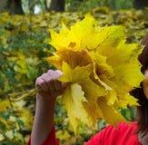 Κίτρινα φύλλα φθινοπώρου προσιτά στοκ εικόνα