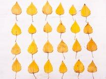 Κίτρινα φύλλα φθινοπώρου σε μια σειρά Στοκ Εικόνα