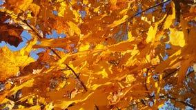 Κίτρινα φύλλα φθινοπώρου Στοκ Φωτογραφίες