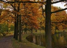 κίτρινα φύλλα χρώματος αντανάκλασης νερού λιμνών δέντρων φύσης φθινοπώρου κήπων πάρκων υπαίθρια Στοκ Εικόνες