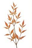 Κίτρινα φύλλα Στοκ Εικόνα