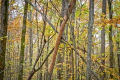 Κίτρινα φύλλα Στοκ φωτογραφίες με δικαίωμα ελεύθερης χρήσης