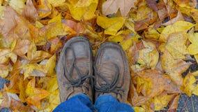 Κίτρινα φύλλα και πόδια Στοκ Φωτογραφία