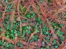 Κίτρινα φύλλα με την πράσινη χλόη Στοκ Εικόνες