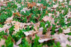 Κίτρινα φύλλα σε πράσινο Στοκ φωτογραφία με δικαίωμα ελεύθερης χρήσης