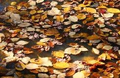Κίτρινα φύλλα στη λακκούβα Στοκ φωτογραφία με δικαίωμα ελεύθερης χρήσης
