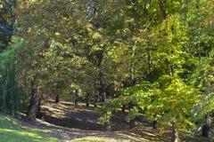 Κίτρινα φύλλα στο πάρκο φθινοπώρου το απόγευμα Στοκ εικόνα με δικαίωμα ελεύθερης χρήσης