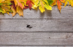 Κίτρινα φύλλα σφενδάμνου φθινοπώρου στο αγροτικό ξύλινο υπόβαθρο Στοκ Εικόνες