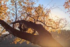 Κίτρινα φύλλα σφενδάμου στη λίμνη johnson σε Raleigh, NC Στοκ φωτογραφία με δικαίωμα ελεύθερης χρήσης
