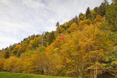 Κίτρινα φύλλα της πτώσης στο καπνώές δάσος βουνών Στοκ Εικόνες