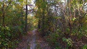 Κίτρινα φύλλα φθινοπώρου στο υπόβαθρο κινήσεων δέντρων απόθεμα βίντεο