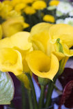Κίτρινα callas Στοκ εικόνες με δικαίωμα ελεύθερης χρήσης