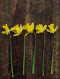 Κίτρινα daffodils σε έναν σκοτεινό ξύλινο πίνακα Στοκ φωτογραφία με δικαίωμα ελεύθερης χρήσης