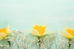 Κίτρινα daffodils σε ένα ξύλινο υπόβαθρο, τοπ άποψη, με ένα κενό διάστημα για το γράψιμο ή τη διαφήμιση στοκ εικόνα με δικαίωμα ελεύθερης χρήσης