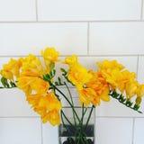 Κίτρινα freesias Στοκ φωτογραφίες με δικαίωμα ελεύθερης χρήσης