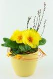 Κίτρινα primroses Στοκ εικόνες με δικαίωμα ελεύθερης χρήσης
