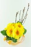 Κίτρινα primroses Στοκ εικόνα με δικαίωμα ελεύθερης χρήσης