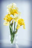 Κίτρινες ίριδες Στοκ φωτογραφία με δικαίωμα ελεύθερης χρήσης
