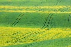 Κίτρινες ακτίνες ήλιων στον πράσινο τομέα σίτου Στοκ Εικόνες