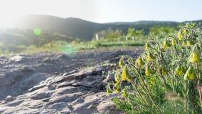 Κίτρινες ακτίνες ήλιων bellflowerunder στην κινηματογράφηση σε πρώτο πλάνο βουνών Στοκ Εικόνες