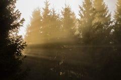 Κίτρινες ακτίνες του φωτός του ήλιου που λάμπουν μέσω των δέντρων Στοκ εικόνα με δικαίωμα ελεύθερης χρήσης