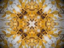 Κίτρινες εγκαταστάσεις στο χιόνι Mandala Στοκ Εικόνα