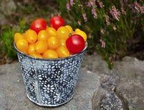 Κίτρινες και κόκκινες ντομάτες Στοκ Φωτογραφία