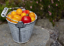 Κίτρινες και κόκκινες ντομάτες Στοκ φωτογραφίες με δικαίωμα ελεύθερης χρήσης