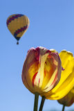 Κίτρινες και κόκκινες τουλίπες με το μπαλόνι ζεστού αέρα Στοκ φωτογραφία με δικαίωμα ελεύθερης χρήσης