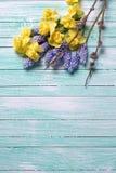 Κίτρινες και μπλε λουλούδια άνοιξη και ιτιά γατών στο τυρκουάζ wo Στοκ Φωτογραφίες