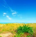 Κίτρινες και πράσινες εγκαταστάσεις θαλασσίως στην παραλία Platamona Στοκ Εικόνες